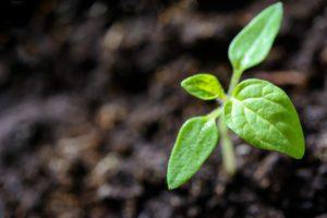 groeien met fiducie financieel duurzaam