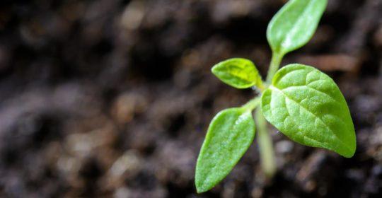 crowdfunding om je bedrijf te starten en financieren, crowndfundingacties, crowdfunding platform